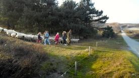 duinen, mooi weer, schaapsherder, schaapskudde,  bordercollie, Maggie ,bestrijdt, Thomas van der Meij, berenklauw