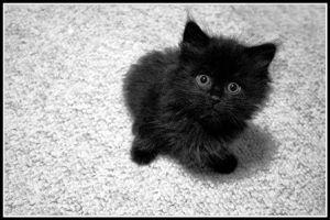 pech, slecht voorteken, zwarte katten, black kat, bad luck