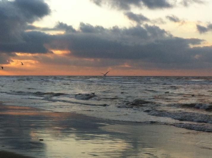 zon, zee, strand, hondje, zeemeeuwen , mooie lucht, wolkt en zon, zonsondergang, wolken, mooie kleuren
