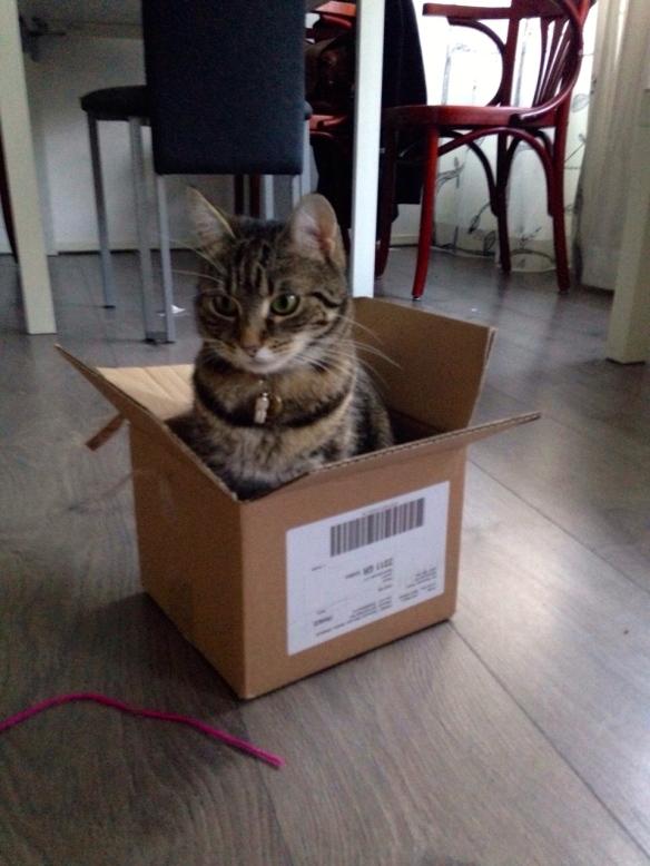 Cyperse kat, Siep, mooi poesje,  in doos