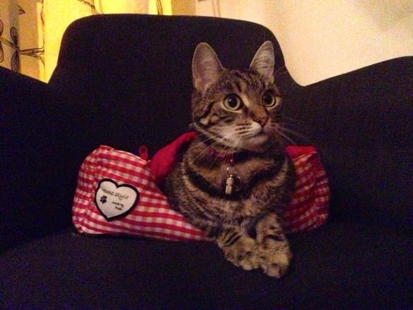 Cyperse kat, Siep, mooi poesje,  in etui