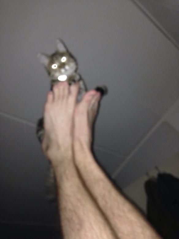 Cyperse kat, Siep, mooi poesje,  vliegend op voeten van man