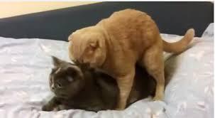 NEUKENDE katten, VRIJDENDE katten