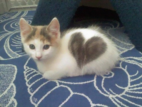froot-katten-die-beroemd-zijn-door-hun-typische-markeringen-8-560x420