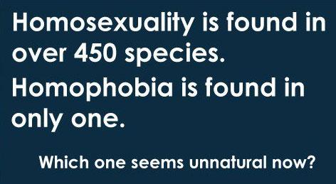 HomoDieren, homoseksualiteit