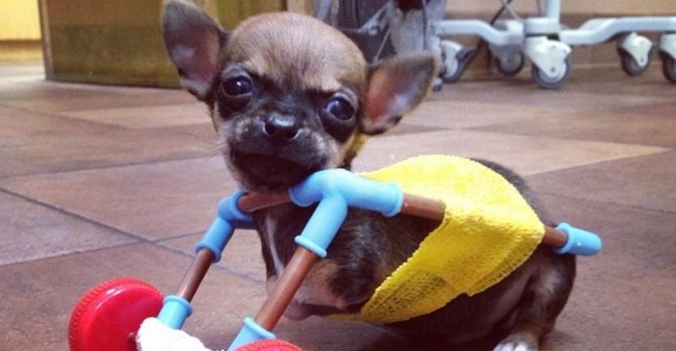 Geleerd Hoe Ze Hun Hond Moeten Behandelen Recepten Van