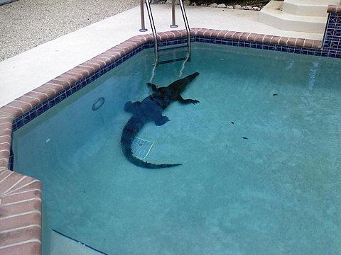 spelen met water,ZWEMMEN, ZWEMBAD,, dikke man, duiken, water, grapjes, , krokodil