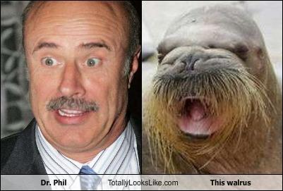 looks-like DR phil animal