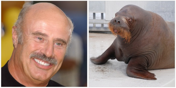 looks-like DR phil animal