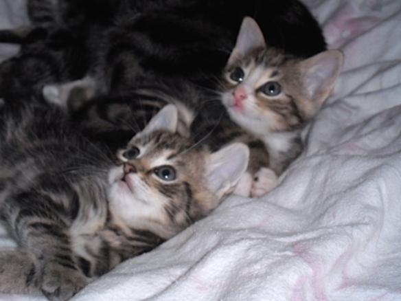 kittens, jonge poesjes, snoezig, lief, moederpoes,