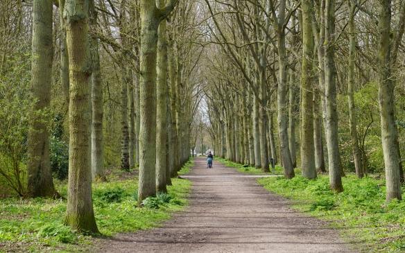 bomenlaan, Leidse Hout