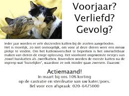 Sterilisatie kat, steriliseren van huisdieren, dierenarts, praktijk, krolse poezen, markeren