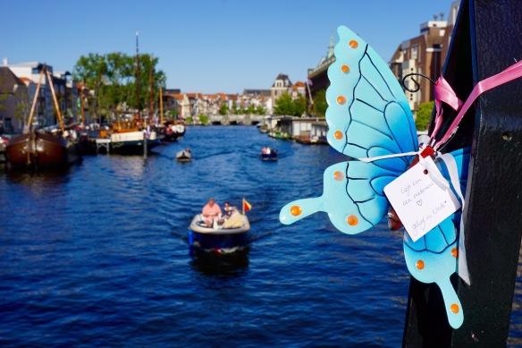 vlinder, transformatie, liefde, vrede, medemens, overbruggen