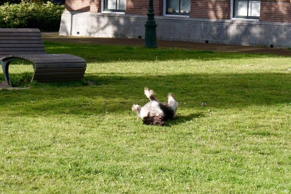 hondje, rollebollen in park, Zeevaartpark, Leiden, met bal