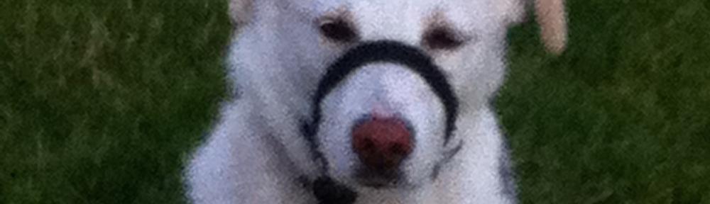 Een apart exemplaar: Sammie, de Roemeense eeuwige pup zonder staart!