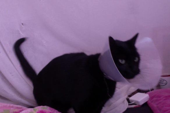 zwarte kater met kap. zieke kat, zwarte kat, dier met kap